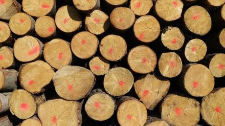 Orkan und Borkenkäfer haben zwar Schäden im Wald von Unterroth angerichtet. Doch die Lage sei noch vergleichsweise gut.