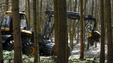 Der Harvester bahnt sich seinen Weg durch die Bäume im Wald bei Biburg.