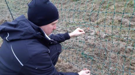 Für Martin Grob ist klar: Die Löcher im Zaun sind kein Lausbubenstreich.