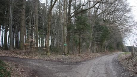 In diesem Waldstück südlich des Parkplatzes am Reinhartshofer Berg soll der Waldkindergarten mit einem Bauwagen als Stützpunkt entstehen.