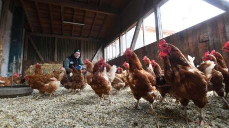 Sebastian Rotter aus Gablingen musste für seine Hühner eine Überdachung bauen, damit sie weiterhin an der frischen Luft sein können.