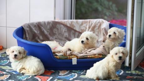 Wie es mit den sechs neuen Hunden im Weißenhorner Tierheim weitergeht, ist noch unklar.