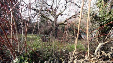Der Garten des Grundstücks Maienweg 2 am Tag vor der Rodung Ende Februar.