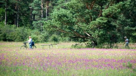 Die Königsbrunner Heide im Stadtwald  ist ein beliebtes Ausflugsziel, gerade auch in Zeiten von Corona. In den kommenden Wochen wird dort und in anderen Schutzgebieten ein Massenansturm befürchtet.