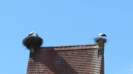 Ein noch im Bau befindliches Storchennest (rechts) wurde in Willmatshofen von der Zinne entfernt. Zuvor überprüfte ein Gutachter, ob es bereits zur Eiablage gekommen war.