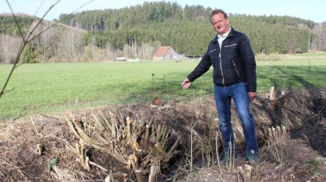 Herbert Poppele kritisiert, dass Büsche und Sträucher in Babenhausen radikal gestutzt wurden.