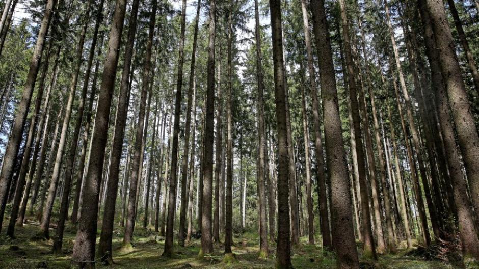 La rareté de l'eau et la sécheresse causent des problèmes de monocultures en forêt.