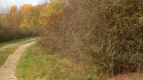 Die Stadt Friedberg und der LBV wollen mehr Hecken pflanzen.