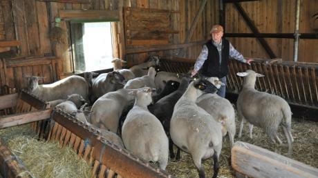 Mindestens einmal täglich schaut Emanuel Weinhart nach seinen Schafen.