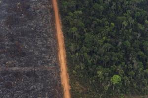 Brandrodung für den Anbau zerstört viele Wälder in Süd- und Mittelamerika