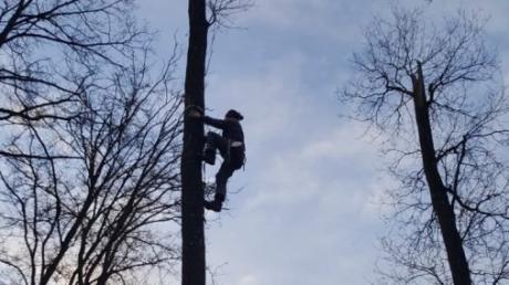 Schwindelfreiheit ist Voraussetzung für das Erklimmen der Bäume.