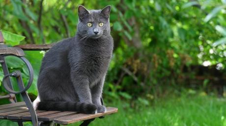 In Gundremmingen hat eine Katze vergiftetes Futter nach Hause gebracht. Die Polizei ermittelt.