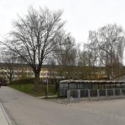 Dieses Wäldchen an der Mittelschule in Burgau wird womöglich beseitigt.