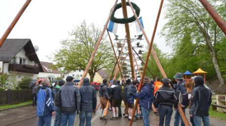 Sie halten zusammen und packen gemeinsam an: So halten es die Oberwittelsbacher normalerweise, wenn sie, wie hier 2015, einen Maibaum aufstellen. In diesem richtet ein Kran den Baum ohne Publikum in die Höhe.