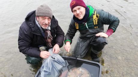 Hüseyin Aydin und Marco Mariani haben die Brutbox in eine mit Lechwasser gefüllte Wanne gestellt. So können sie die befruchteten Bachforelleneier ohne störende Strömung einbringen.