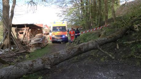 In Peterhof im Landkreis Augsburg ereignete sich am Mittwoch ein schwerer Unfall. Zwei Frauen wurden von einem stürzenden Baum getroffen.