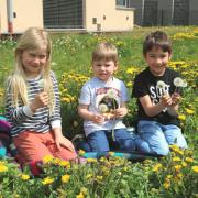 Eine Löwenzahnwiese mit hunderten von strahlend gelben Blüten direkt in einem Rehlinger Hausgarten war der passende Rahmen und wie geschaffen für ein frühlingshaftes Motiv. Die Blühtezeit ist auch schon fest vorbei und diese gelben Blühten verwandeln sich bereits in die bei den Kindern so beliebte Pusteblume. Dieses kleine Picknick in der Blumenwiese von Uronkel Wolfgang Haberl genießen von rechts Michael und Emil und noch das Nachbarmädchen Leni, die sichtlich ihren Spaß hatten an dem noch sonnigen Tag.
