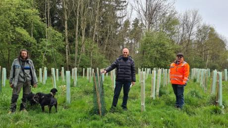 Die Gemeinde Kissing hat ein kleines Waldstück in Mering aufgeforstet, das in ihrem Besitz ist: (von links) Rudi Brandl, Reinhard Gürtner und Christian Golling.
