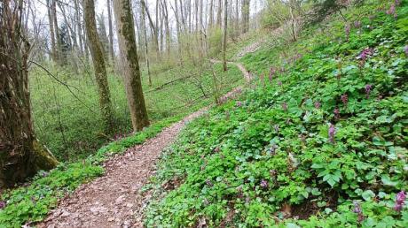 So idyllisch schlängelt sich der Pfad bei Regglisweiler durch den Wald.