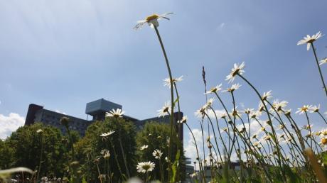 Beim Projekt Artenvielfalt in Augsburg gibt es große Fortschritte. Auch an der Uniklinik sorgen neue Blühflächen  dafür, dass Insekten Nahrung finden.