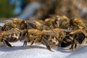 Seit einem Jahr lebt einen Bienenvolk auf dem Gelände unseres Verlagshauses. Das waren aufregende Zeiten - aber lesen Sie selbst.