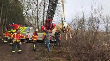 Die Feuerwehr Schwabmünchen wurde vor Jahren zu einem tierischen Einsatz an die Wertach gerufen. Eine Kuh musste mit der Drehleiter gerettet werden.