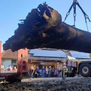 Wenn ein Baumriese vor dem Brennholztod gerettet wird, wie diese 350 -jährige Eiche, ist es immer eine aufsehenerregende Aktion.
