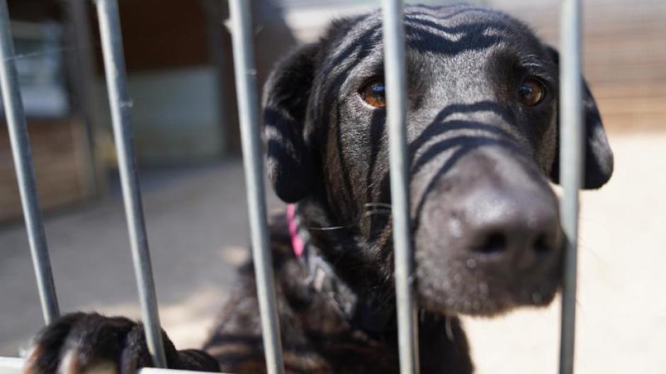 In der Hochphase der Pandemie konnten sich Tierheime kaum vor Anfragen retten. Mit der Rückkehr zur Normalität droht eine Abgabe-Welle. Teilweise werden die Tiere im Internet wieder verkauft.