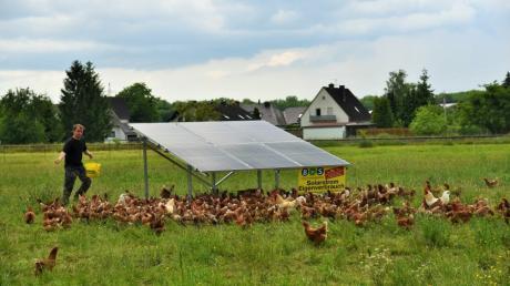 PV-Module bilden einen schützenden Unterstand für Hühnerhaltung. Unser Bild zeigt Landwirt Alois Heinz bei der Fütterung einer Hühnerherde.