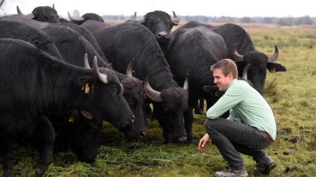 Martin Grob aus Allmannshofen ist mit seinen Wasserbüffeln für den Ceres Award nominiert.