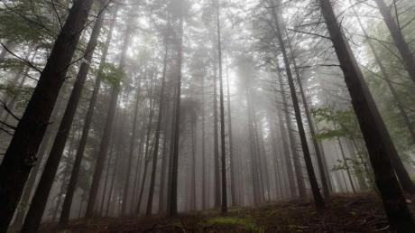 Wälder können Niederschläge begünstigen und so die Folgen des Klimawandels mildern