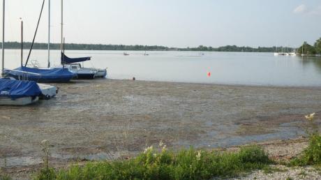 Am Mandichosee wird so einiges ans Ufer geschwemmt. Besucher beschweren sich über Gestank.