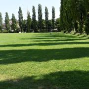 Stadt will im Herbst neue Klima-Bäume auf der beliebten Spielwiese an der Amberger Straße im Textilviertel pflanzen -  aber nicht nur dort.