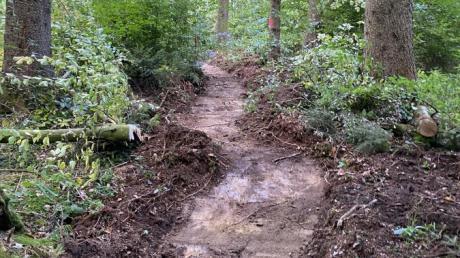 Momentan weisen im Höglwald bei Zillenberg nur ein paar gefällte Bäume  darauf hin, dass hier ein Walderlebnispfad entsteht.