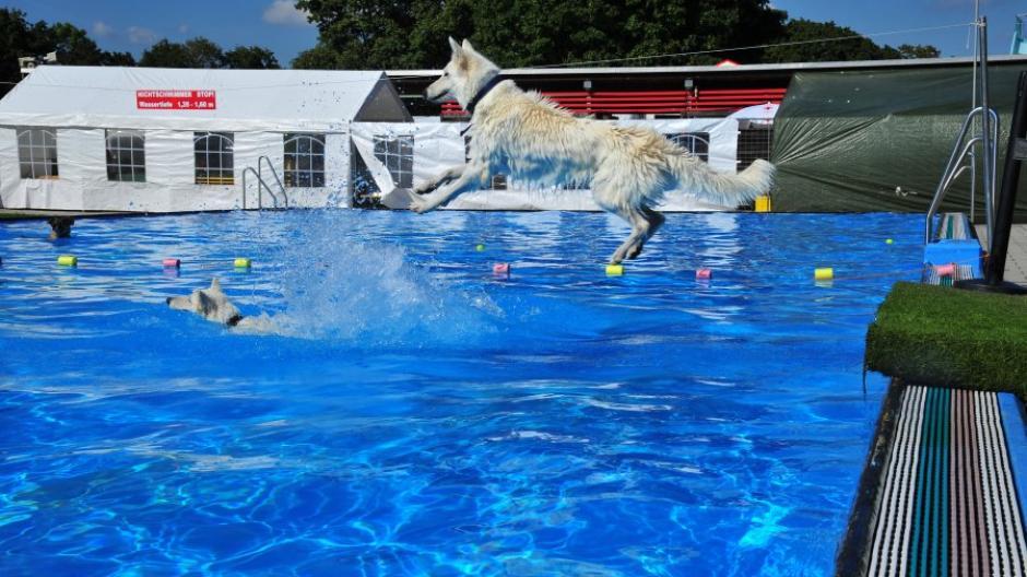 Nicht nur beim Weitsprung in den Pool hatten die Hunde ihren Spaß.