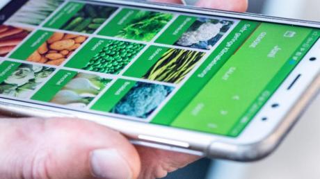 Welches Gemüse und Obst wächst gerade auf heimischen Feldern? Die App «Grünzeit» zeigt es mit Hilfe eines Ampelsystems.