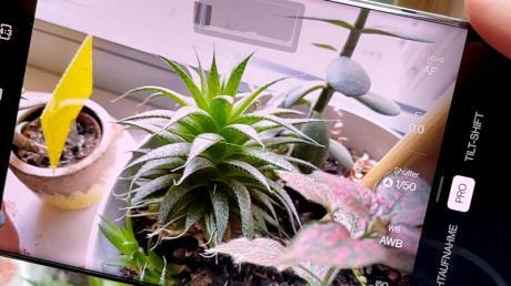Stachelpflanze im Fokus. Die Kamera des Oneplus 9 Pro erkennt Objekte und stellt sich drauf ein. Oder man wählt den Pro-Modus und stellt alles selbst ein.