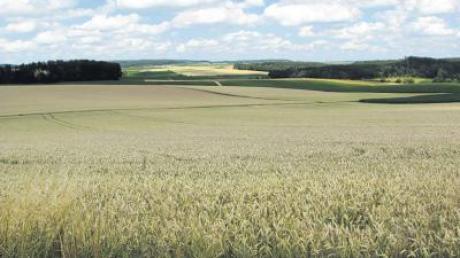 Über diesem Feld nordwestlich von Stillnau musste die Besatzung um den Co-Pilot Sandy Groendyke im Oktober 1944 notlanden und wurden gefangen genommen.