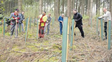 Ganz so locker, wie auf dem Bild für den Fotografen, ging es nicht zu bei der Baumpflanzung in Medlingen. Teilweise musste Schwerarbeit geleistet werden.