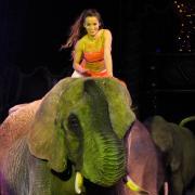 Alois_u_Diana_Spindler_-_Elefanten.JPG