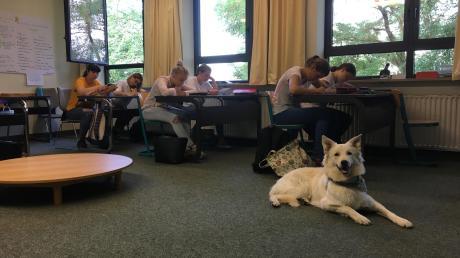 Murphy_Schulhund_1.JPG