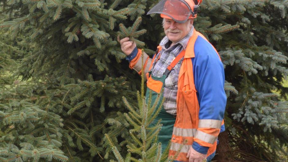 Der Letzte Weihnachtsbaum.Landkreis Dillingen Auf Der Suche Nach Dem Perfekten Weihnachtsbaum