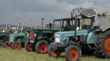 Die nach dem Krieg äußerst beliebten Hanomagtraktoren stehen in Finningen in Reih und Glied. Dazwischen hat sich als ein Kramer Oldtimer (Dritter von rechts) eingeschlichen und am Anfang der Reihe steht ein selten gebauter Großschlepper der Firma Eicher.