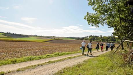 Über Feld- und Waldwege, am Wald entlang oder mitten durch, führt ein Großteil der Wegstrecke durch die schöne Landschaft in Binswangen, hier mit Blick in Richtung Zusamaltheim.
