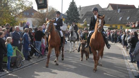 Eine Abordnung des Reitvereins Holzheim bahnt sich beim Leonhardiritt in Unterliezheim den Weg durch das Dorf – vorbei an den zahlreichen Besuchern, die der Anblick der edlen Tiere begeistert.