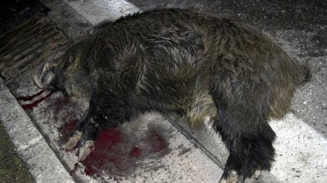 Bei Medlingen ist ein Mann mit seinem Wagen gegen ein Wildschwein geprallt.
