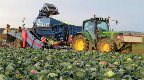 Für die Bauern spitzt sich die Krise zu. Wegen des Coronavirus fallen Erntehelfer aus dem Ausland, die gerade für die Kohl- und Gemüseernte wichtig waren, aus. Ob Arbeitnehmer aus anderen Branchen, die wegen der Krise nicht zur Arbeit gehen können, da Ausgleich schaffen? BBV-Kreisobmann Klaus Beyrer glaubt nicht daran.