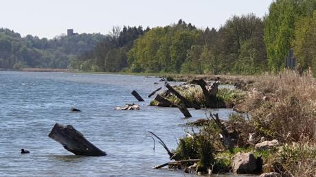 Lebensraum für Tiere und Pflanzen bietet die Öko-Berme am Offinger Stauseedamm (hinten links die Reisensburg). Auch Seerosen sind auf den Sedimenten heimisch geworden (rechts).