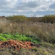 Das Dattenhauser Ried ist besonders schützenswert. Das Niedermoor bindet viel Kohlenstoffdioxid. Doch erst diese Woche wurde wieder Müll abgelagert: Ein Spaziergänger hat Obstmaische entdeckt.
