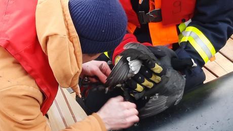 Immer wieder müssen Rettungskräfte ausrücken, um verunglücktem Tieren zu helfen.